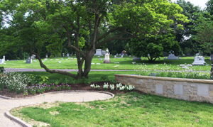 View down Woodbine Avenue through the historic center of the cemetery.